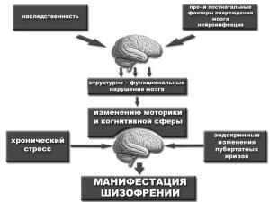 Схема возможных причин развития шизофрении