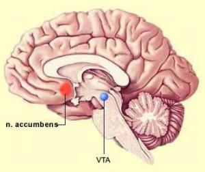 На изображении точечками отмечены области продуцирования дофамина как основного вещества, отвечающего за психоэмоциональное состояние личности. Если в этих областях происходит сбой, то возникает ангедония и ряд других психических расстройств.