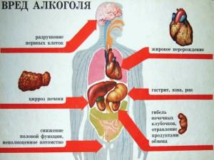 Негативное влияние алкоголя на организм человека