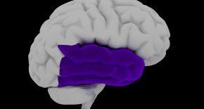 Височная эпилепсия