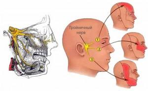 Тройничный нерв и зоны иннервации